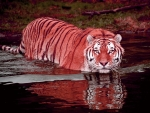 Lovely Pink Tiger