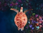 Beautiful Turtle and Corals