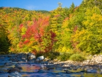 Colorful Fall Trees by Rocky River Stream