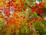 The Best of Autumn's Beauty