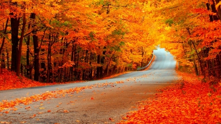 Beautiful Fall Forests Nature Background Wallpapers On