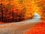 Beautiful Fall