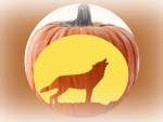 Wolf And Pumpkin