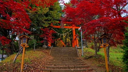 Torii Gate - red, gate, japan, torii, autumn, japanese, shrine, temple, scenery