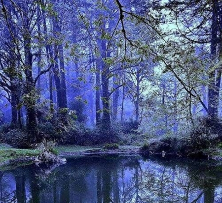 blue forest - photography, forests, nature, blue, beautiful