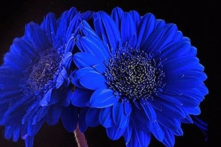 blue flowers , Flowers \u0026 Nature Background Wallpapers on