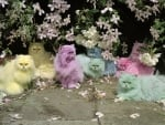 Beautiful Pastel Cats