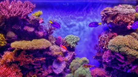 Coral and Fish - Ocean, Fish, Underwater, Coral