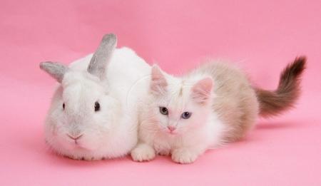 Cute Pets In Pink Cats Animals Background Wallpapers On Desktop Nexus Image 2422815