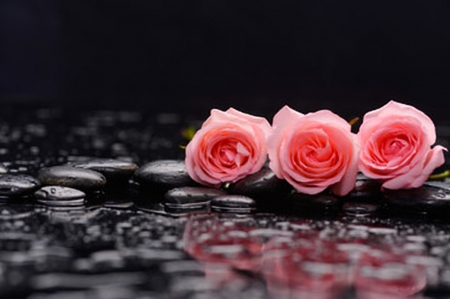 Pink Roses and stones - Reflection, Still life, Roses, Flowers, Stones