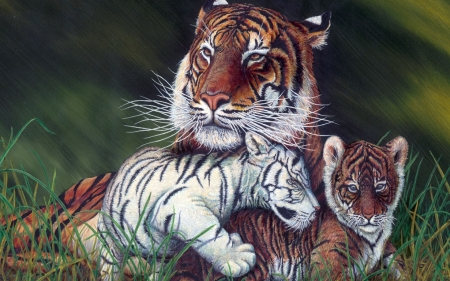 Tiger With Baby Tiger And Albino Baby Tiger Cats Animals