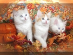Thanksgiving kittens