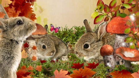 Autumn Bunnies - grass, rabbits, mushrooms, bunnies, fall, toadstools, autumn, butterflies, leaves, wild, garden