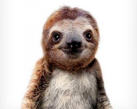 Sloth Fantasy Pets