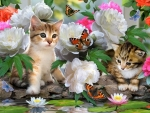 kittens and butterflies