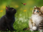 kittens and Ladybird