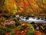 Autumn River And Rocks