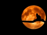 Black Cat's Blood Moon