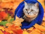 Cat in the autumn