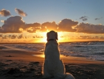 Dog lloking at sunset