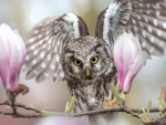 owl and magnolias