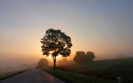 Sunrise in Germany - trees, road, mist, sunrise, Germany, landscape