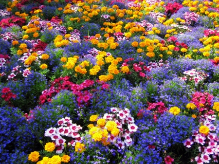 flowers, flowers - colors, flowers, beauty, nature, photography