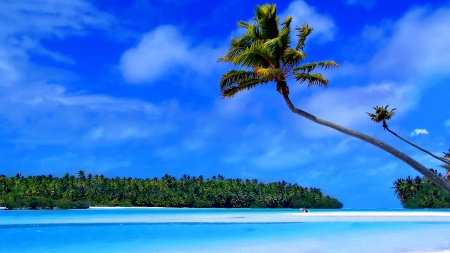Palm Trees over Tropical Ocean - Ocean, Tropical, Trees, Palm