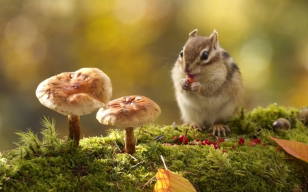 Hungry Chipmunk - berries, chipmunk, photo, acorn, grass, mushrooms, nature
