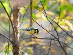 Titmouse on Tree