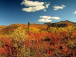 Indian Summer, Yukon Area