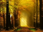 Golden autumn rays