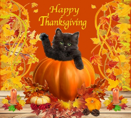 Thanksgiving Kitty Cats Animals Background Wallpapers On Desktop