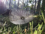 Cobweb in Forest