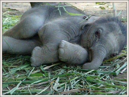 cute baby elephant elephants animals background wallpapers on