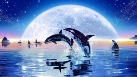 Orca Dolphins Animals Background Wallpapers On Desktop