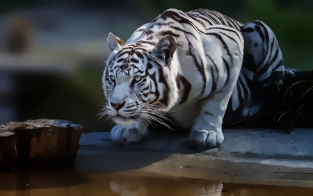 White tiger - paw, tiger, white, animal, tigru