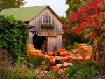 pumpkins and autumn flowers