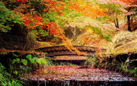 Autumn Bridge - stream, leaves, autumn, bridge, park, nature, cascade, trees