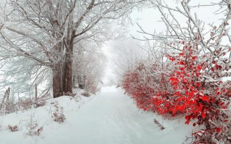 snow in november winter nature background wallpapers. Black Bedroom Furniture Sets. Home Design Ideas