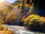 Autumn River China Forest