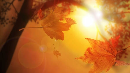 Falling of Leaves - tree, autumn, leaves, maple, woods, sunlight, light, Firefox theme, fall, flares