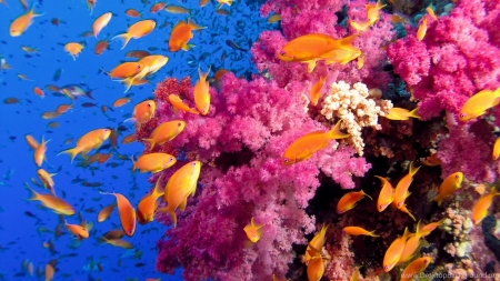 Fish and Coral - Animal, Fish, Underwater, Coral
