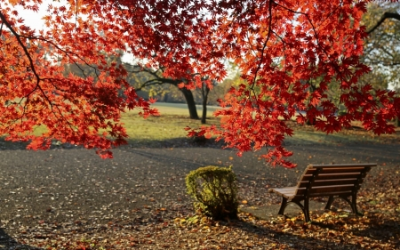 Autumn Park - tree, park, red leaves, autumn, maple, bench