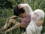 Boy And Albino Gorilla