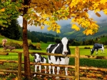 Autumn in The Pasture