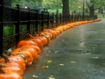Raining Pumpkins In The Park