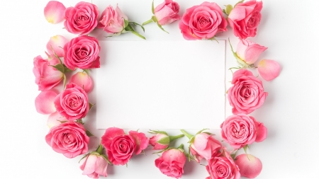 :-) - rose, pink, frame, flower, trandafir, card