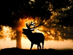 Red deer in autumn