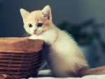 cute kitten with a basket